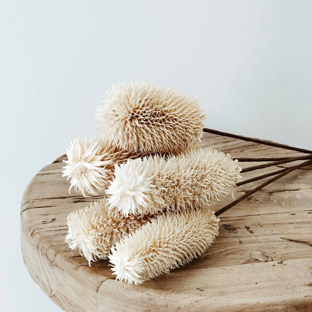 Thistle - White - Dried