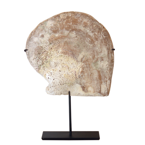 Vintage Shell on Stand II