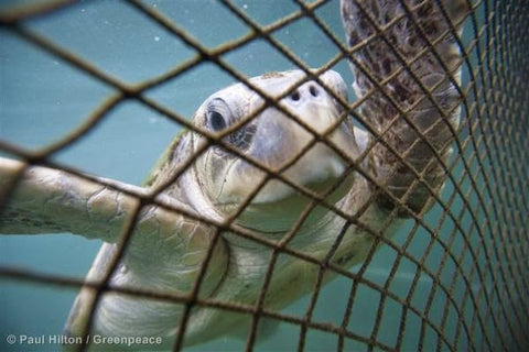 sea turtle net