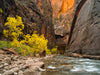 Zion Narrows - 1462