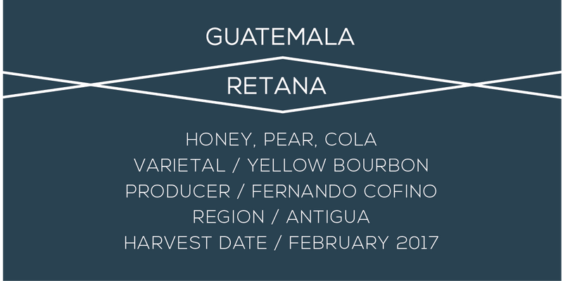 Guatemala, Retana, Yellow bourbon, Coffee