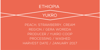 YUKRO ETHIOPIA CASE COFFEE