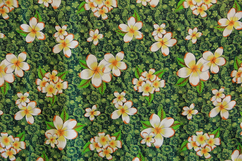 Plumeria Flowers in Hibiscus background Green
