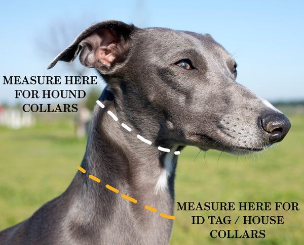 how to measure a sighthound for a collar