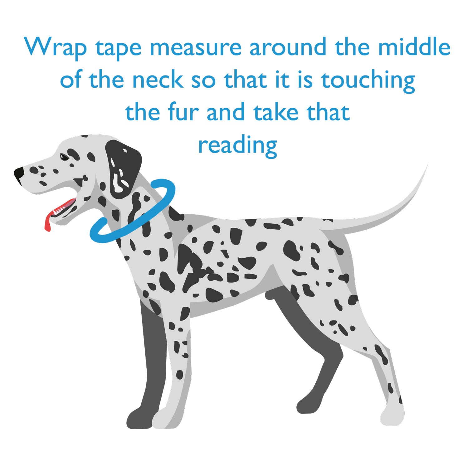 how to measure a leather dog collar
