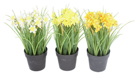 Daffodils in pot by Gisela Graham