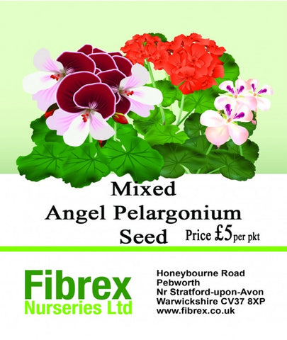 Mixed Angel Pelargonium Seed