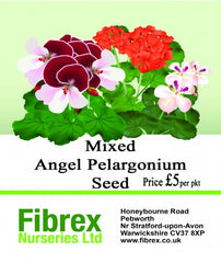 Picture of  Mixed Angel Pelargonium Seed