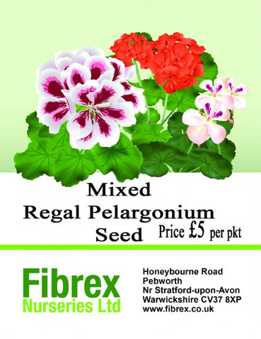 Mixed Regal Pelargonium Seed