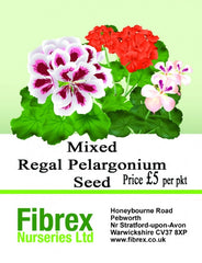 Picture of  Mixed Regal Pelargonium Seed