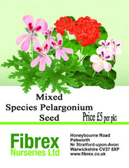 Picture of Mixed Species Pelargonium Seed