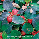 Cooling wintergreen oil
