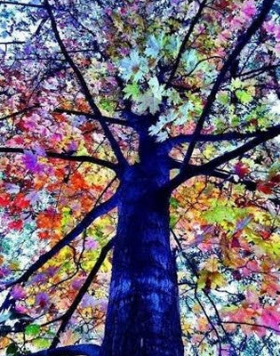 "Sep 3, Thu, 7-9pm ""Colorful Tree"" Public Wine & Paint Class in St. Charles"