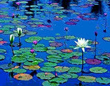 "July 21, Tuesday , 7-9 pm ""Water Lillies"" Private Party"