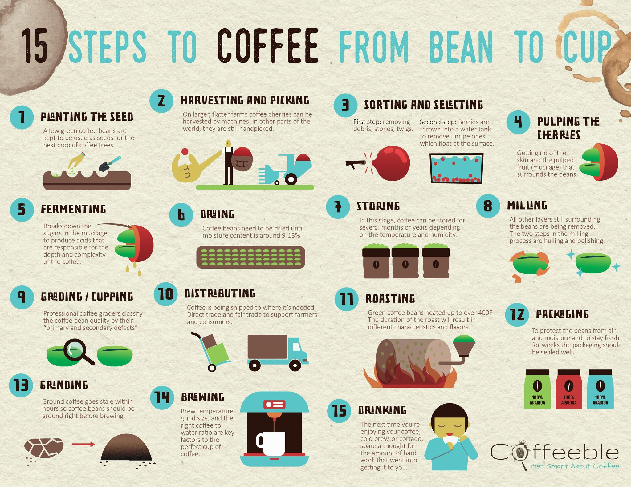 15 Steps From Bean To Cup By Thomas Fuetterer Pomeroys