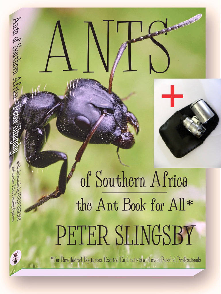 SB01 Ants of Southern Africa plus mini-microscope SPECIAL! (available in SOUTH AFRICA only)