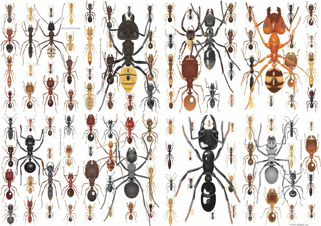 BAG02 Ants Poster/Wrapping paper (available in SOUTH AFRICA only)