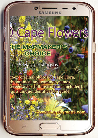 DCF01 Digital Sixteen Hundred Cape Flowers