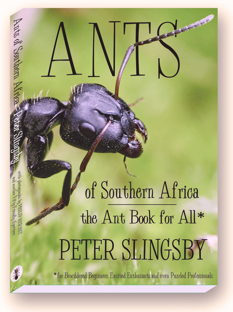 BA01 Ants of Southern Africa (available in SOUTH AFRICA only)