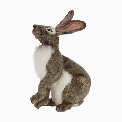 grey jack rabbit