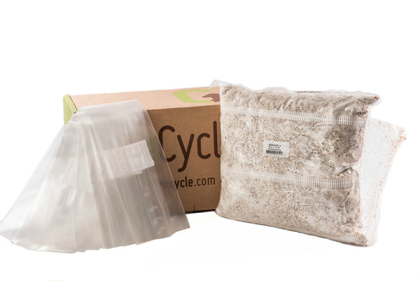Oyster Mushroom Spawn UK – GroCycle