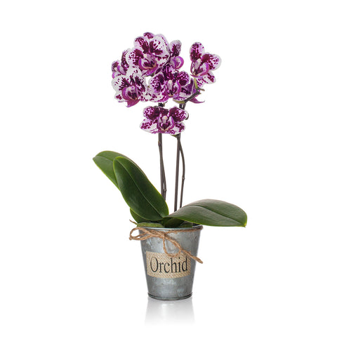 Galvanized Rustic Mini Orchid