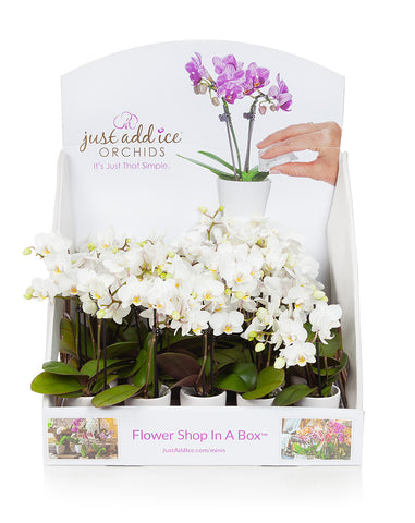 Mini Orchid Party Pack (20)