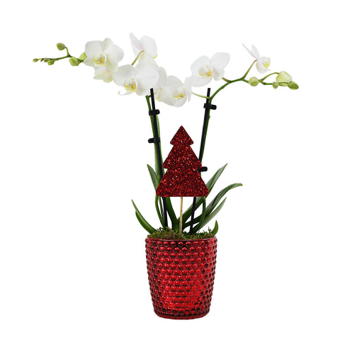 The Bianca Orchid with Red Glitter Tree Pick
