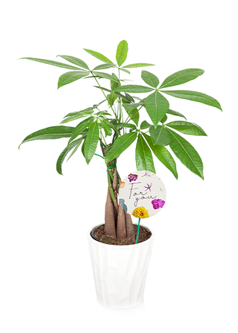 Nolan 'For You' Mother's Day Money Tree