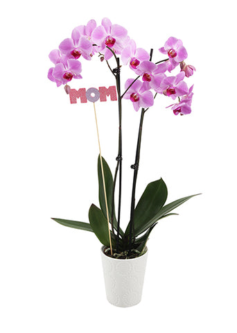 Fiona 'With Mom' Premium Mother's Day Orchid