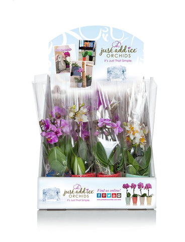 Flower Shop in a Box™ Multicolor (12 Pack)