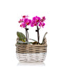 Darling Duo Mini Orchid Planter