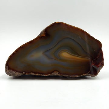 Cut and Polished Brown Blue Gray Banded Brazilian Agate