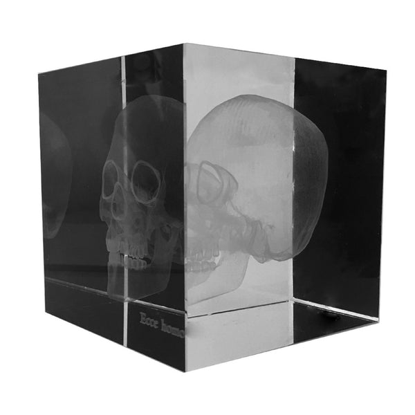 Three-Dimensional Skull in Acrylic Cube