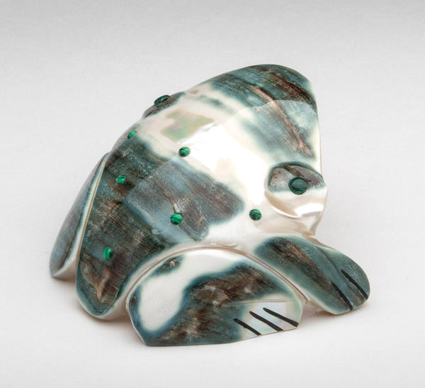 Pacific Green Snail Shell Amphibian