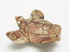 Delightful Wonderstone Turtle