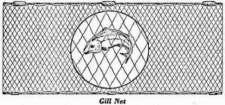 "Nylon Gillnet Netting No.104 (210/4)x2-1/2""x200yards"