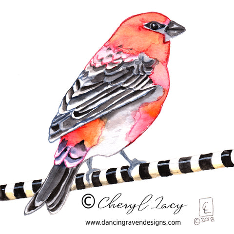 Tiny Original - 30 Birds - Pine Grossbeak