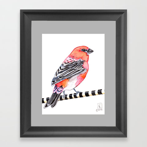 Pine Grosbeak  - Art Print