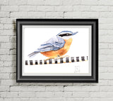 Nuthatch  - Art Print
