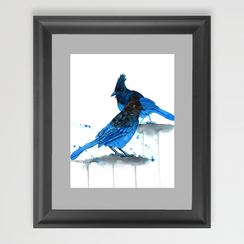 Stellars Jays - Art Original