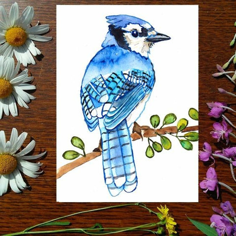 Greeting Card - Blue Jay