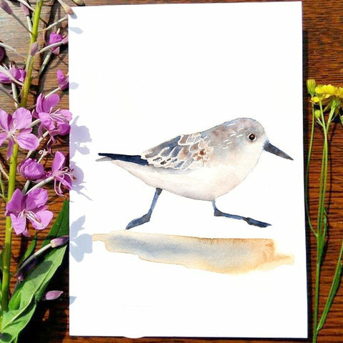 Greeting Card - Sandpiper