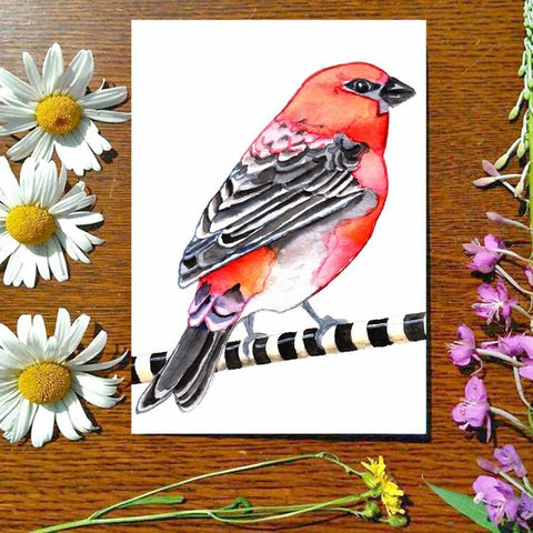 Greeting Card - Pine Grosbeak
