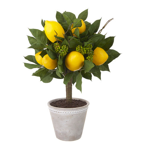 "16"" potted lemon topiary"