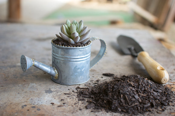 Zinc Miniature Watering Can with Brass Beads