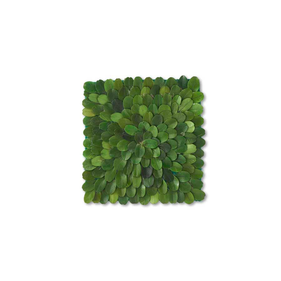 Square Boxwood Coaster