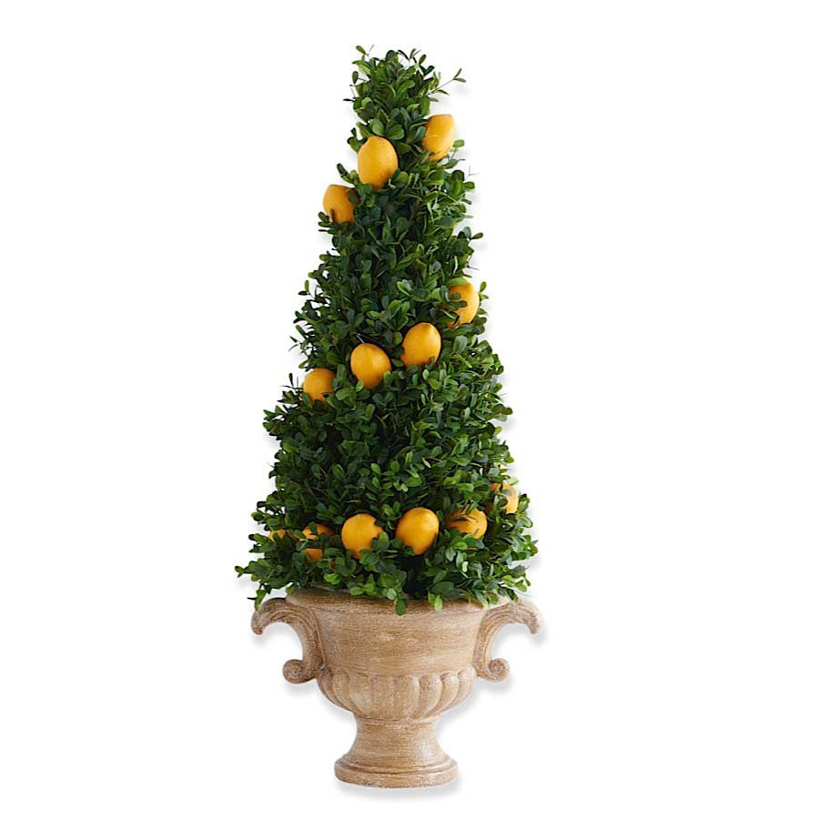Large Boxwood Cone Lemon Tree