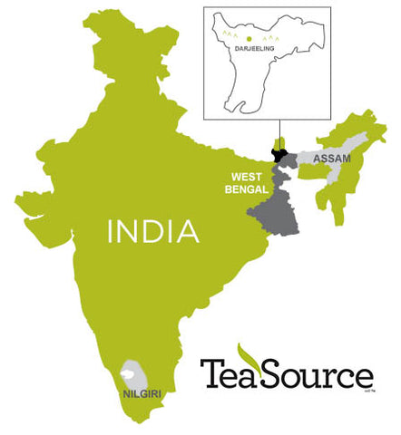 What is Nilgiri Tea? | TeaSource