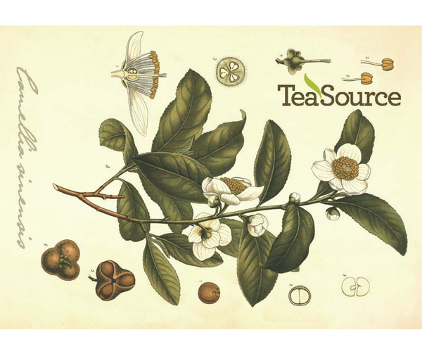TeaSource E-Gift Card